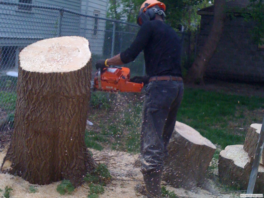 WE CUT STUMP AS LOW AS POSSIBLE