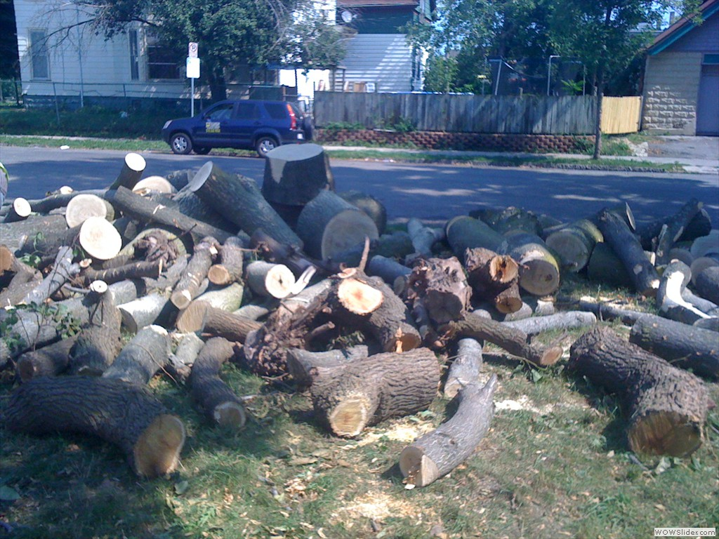 WE COLLECT LOGS AND HAUL THEM